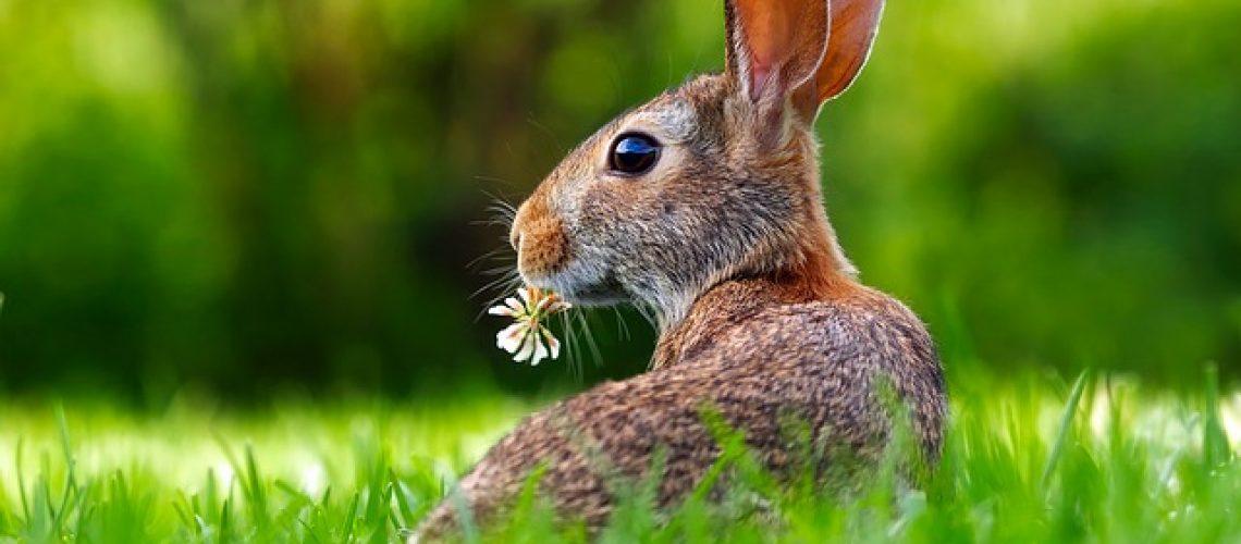 rabbit-1903016_640